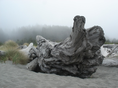 The Graveyard North Coast, CA
