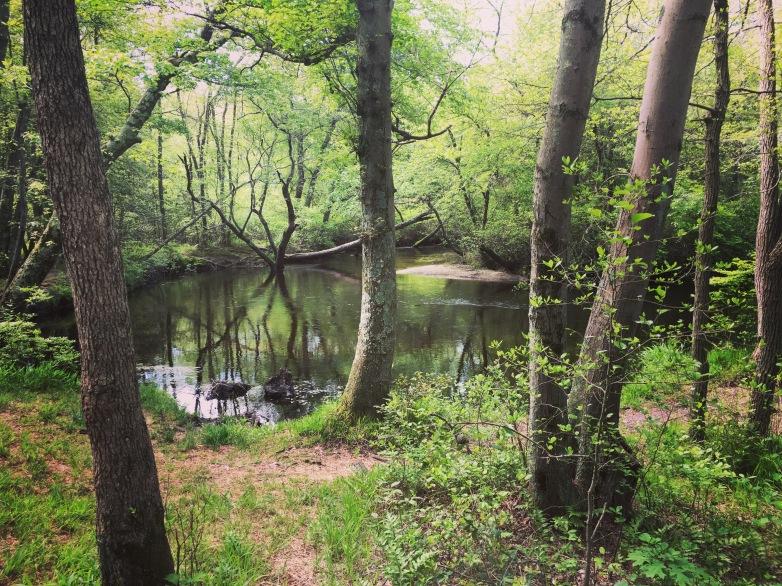 DEMDC Riverwood